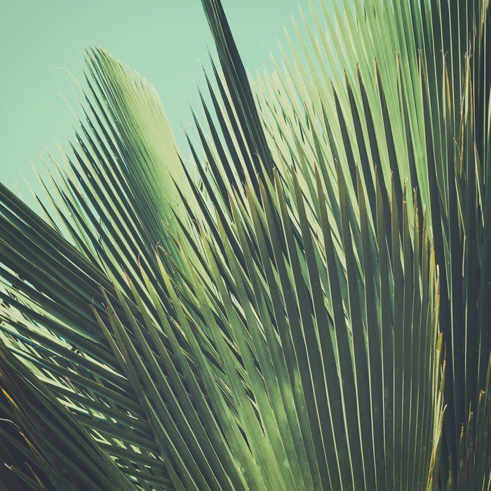 Tvättbar Fototapet Abstrakt tropisk vintage bakgrund. Palmblad i solljus. - Växter & blommor