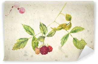 Tvättbar Fototapet En gren av hallon - realistiskt akvarellmålning. På vintage beige bakgrund.