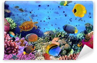 Tvättbar Fototapet Foto av en korall koloni