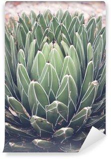 Tvättbar Fototapet Närbild på agave suckulent växt, selektiv fokusera, toning