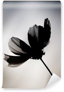 Tvättbar Fototapet Schwarze Blume / Eine im Farbton veränderte Cosmea vor einem verwischten Hintergrund.