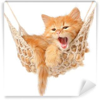 Tvättbar Fototapet Söt rödhårig kattunge i hängmatta