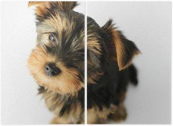 Tweeluik Yorkshire terrier - portret van een schattige puppy