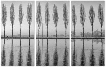Üç Parçalı Alberi riflessi sul lago all'alba in bianco e nero
