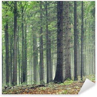 Pixerstick para Todas las Superficies Árboles forestales.
