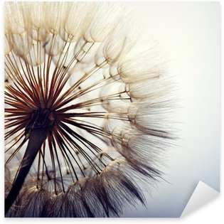Vinilo Pixerstick big dandelion on a blue background
