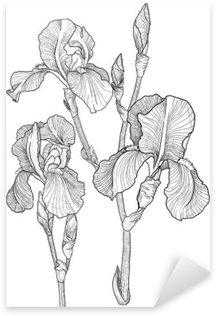 Pixerstick para Todas las Superficies Bosquejo de ramo de lirios en flor