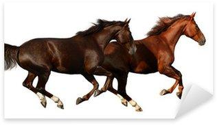 Pixerstick para Todas las Superficies Budenny caballos galopan - aislados en blanco