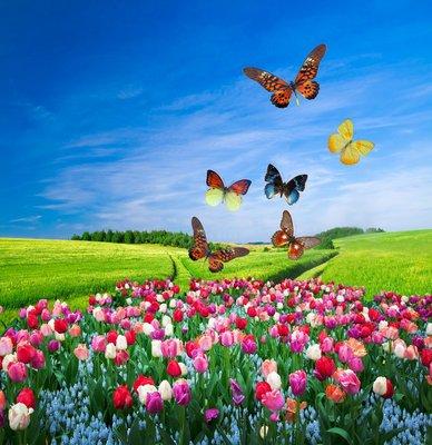 Pixerstick para Todas las Superficies Campo de flores de colores y un grupo de mariposas