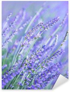 Pixerstick para Todas las Superficies Campo de flores de lavanda
