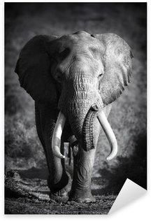 Vinilo Pixerstick Elefante Bull (procesamiento Artístico)