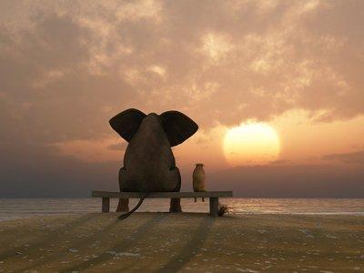 Pixerstick para Todas las Superficies Elefante y el perro se siente en una playa de verano