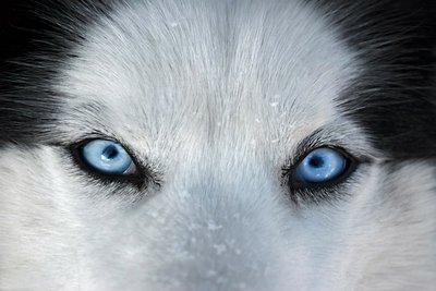Pixerstick para Todas las Superficies Esos ojos azules en frente ...