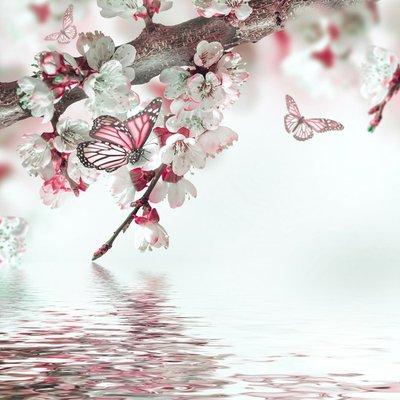 Pixerstick para Todas las Superficies Flores del albaricoque en la primavera, fondo floral