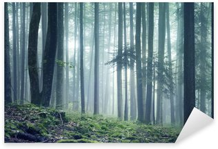 Pixerstick para Todas las Superficies Forest panorama