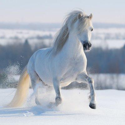 Pixerstick para Todas las Superficies Galopante caballo blanco