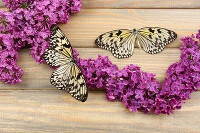 Pixerstick para Todas las Superficies Hermosas mariposas y flores de color lila, en fondo de madera