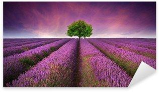 Vinilo Pixerstick Impresionante puesta de sol paisaje de campo de lavanda de verano con un solo árbol