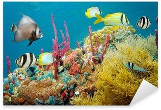 Pixerstick para Todas las Superficies La vida marina subacuática de colores en un arrecife de coral