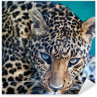 Pixerstick para Todas las Superficies Leopardo