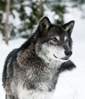 Pixerstick para Todas las Superficies Lobo