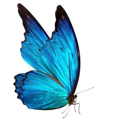 Pixerstick para Todas las Superficies Mariposa macro de fondo