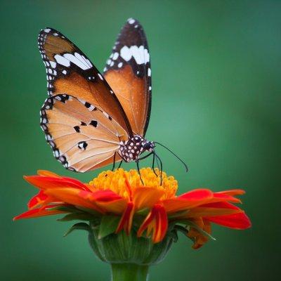 Pixerstick para Todas las Superficies Mariposa sobre una flor