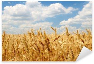 Pixerstick para Todas las Superficies Oídos del trigo en campo bajo el cielo azul