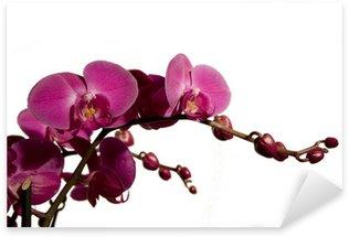 Pixerstick para Todas las Superficies Orchidea