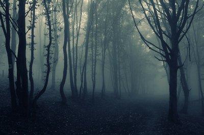 Pixerstick para Todas las Superficies Paisaje de bosque de niebla