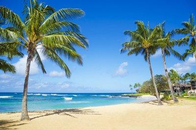 Pixerstick para Todas las Superficies Palmeras en la playa en Hawai