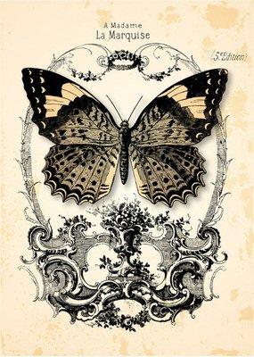 Pixerstick para Todas las Superficies Papillon de Fond