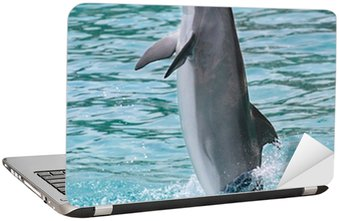 Aire portatil dolphin stunning terminal porttil dolphin for Bauhaus girona catalogo
