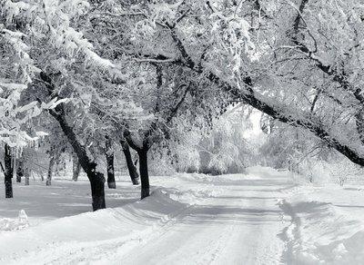 Pixerstick para Todas las Superficies Parque del invierno, el paisaje