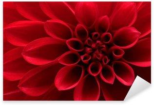 Pixerstick para Todas las Superficies Primer plano de flor roja dahlia