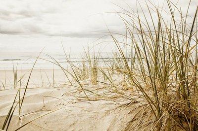 Pixerstick para Todas las Superficies Primer plano de una hierba alta en una playa durante la temporada nublado