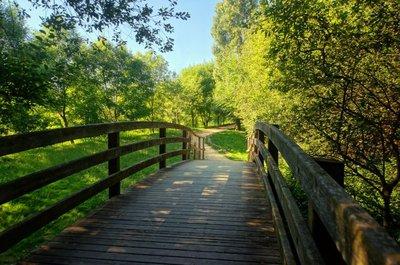 Pixerstick para Todas las Superficies Puente de madera en el parque