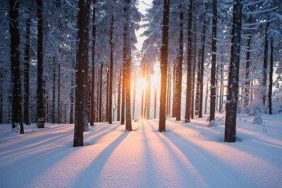 Pixerstick para Todas las Superficies Puesta del sol en el bosque en temporada de invierno