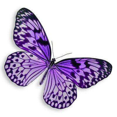 Pixerstick para Todas las Superficies Purple Butterfly vuelo