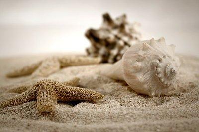 Pixerstick para Todas las Superficies Seashells en la arena