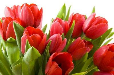 Pixerstick para Todas las Superficies Tulipanes de Holanda