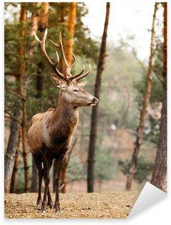 Pixerstick para Todas las Superficies Venado ciervo rojo en el bosque de otoño otoño