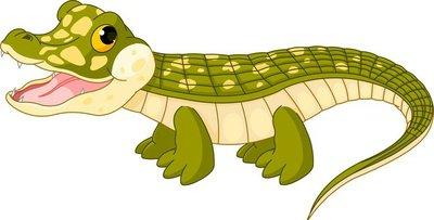 Baby crocodile