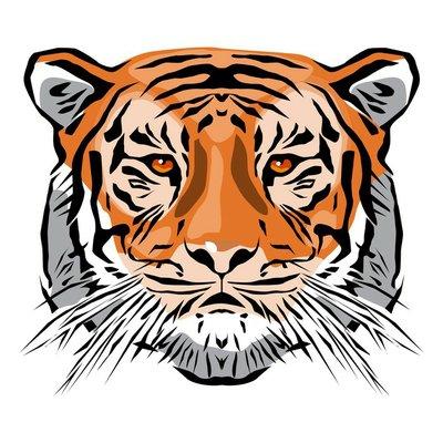 bengal tiger head shot
