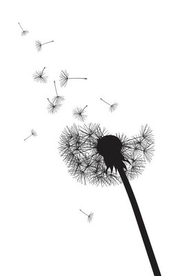 Wall Decal black and whte dandelion loosing his integrity