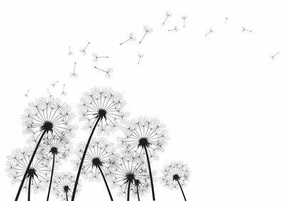 black dandelions on white background