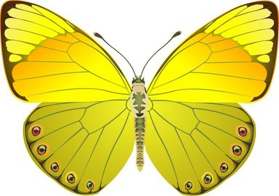 butterfly yellow fantasy