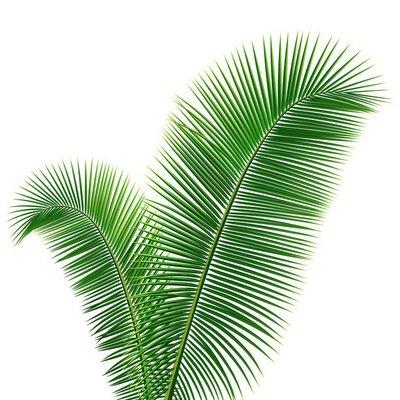 Coconut leaves design background, vector illustration