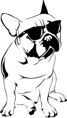 Cool Boy - French Bulldog