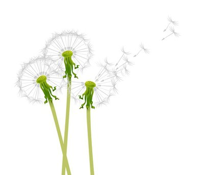 Wall Decal dandelions in the wind